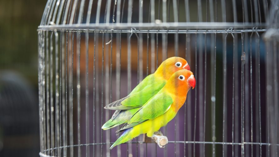 How to Properly Setup Budgie cage?